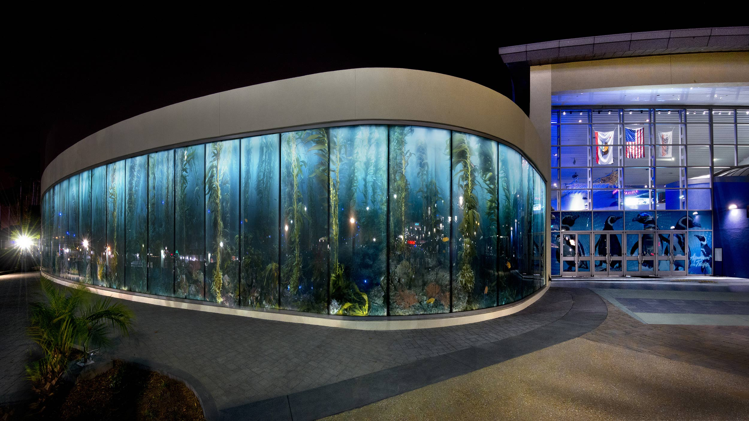 Spectacular 12 Ft High X 125 Wide Kelp Forest Image Reproduced In Gl Windows At The Aquarium Of Pacific Long Beach Ca